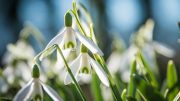 Imbloc flowers